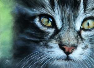 Un regard de chat gris